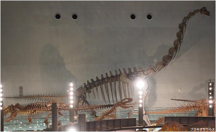 ブラキオサウルス、頭のてっぺんが鼻モッコリ、前肢が後肢よりも長い ...