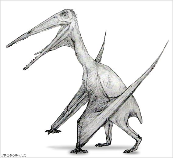 プテロダクティルス、最初に発見された翼竜と発見当時の珍説